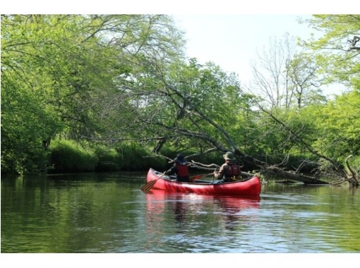 [Hokkaido] Experience a canoe in an unexplored region over untouched nature! Bekanbeushi River Canoe Touringの紹介画像