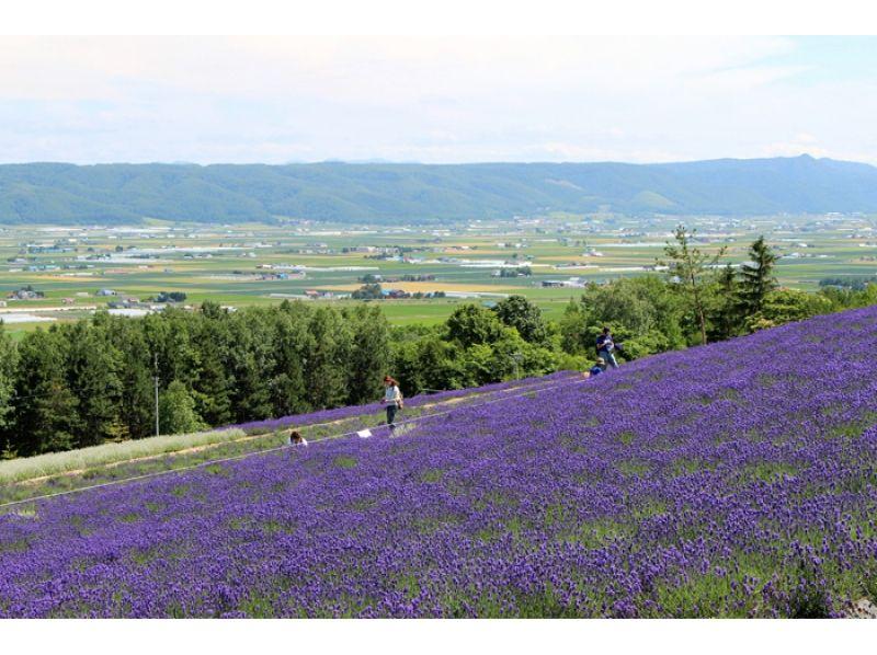【北海道・美瑛】美瑛・富良野 ラベンダー サイクリングツアー♪の紹介画像