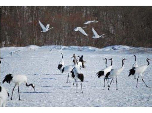 【北海道・釧路】プライベートハイヤー利用で観光ツアー「丹頂と釧路湿原展望台コース」2時間