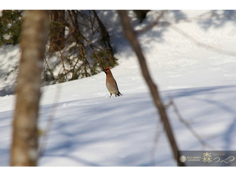 [Hokkaido Abashiri] snowshoe DE introduction image of snow in the forest walk (90 minutes)