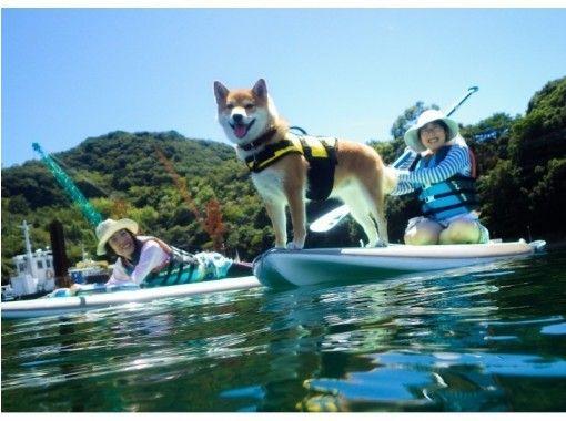 【関西・兵庫・淡路島】愛犬と一緒に水上さんぽSUP体験! 体験写真のデータプレゼント!!