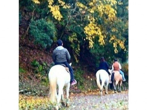 【兵庫・丹波篠山】初心者森林浴外乗★山を登る散歩