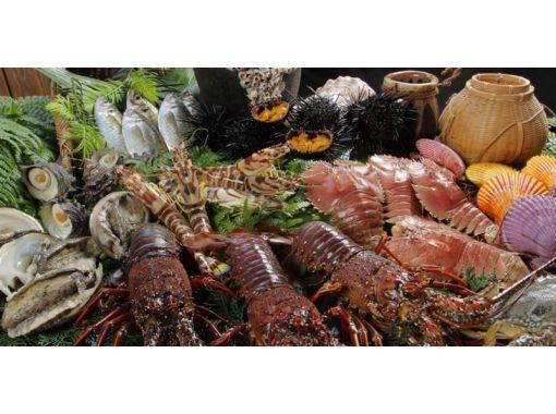【熊本・天草】野生のイルカに遭いに行こう!イルカウォッチング&お食事セット !