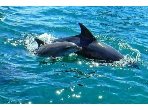 [熊本/天草]我们一起去见野生海豚吧!海豚观赏和用餐套餐!の紹介画像