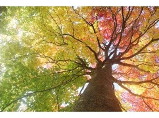 【北海道・黒松内町】歌才ブナ林ガイドウォーク(ショートコース/90分)癒しの時間を楽しんでみませんか?