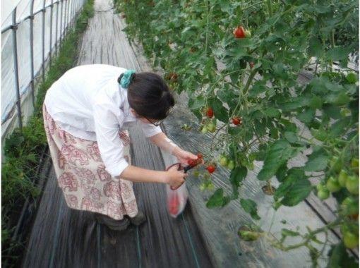 【北海道・黒松内町】農業体験 ☆季節の野菜を収穫しよう!