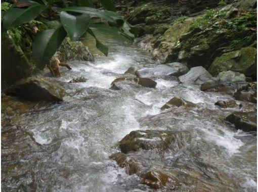 【沖縄・今帰仁村】沖縄北部やんばるの秘境で、滝トレッキングツアー!!