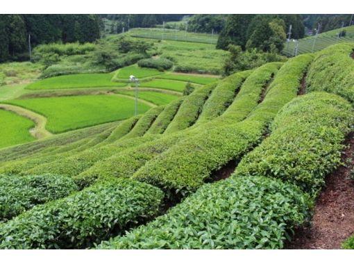 【京都・宇治・和束】日本茶飲み比べ ♪(煎茶または抹茶・英語OK)