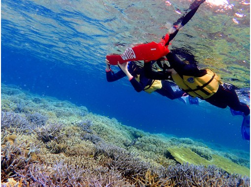 Go To Travel! [Okinawa / Iriomote Island] A miracle island! Barasu Island, a piece of coral, a half-day snorkel tour   You can use regional coupons!の紹介画像