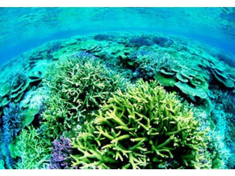【沖縄・慶良間】大珊瑚礁シュノーケリングプラン(餌付け体験付き)の紹介画像