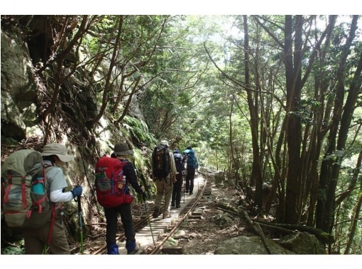 【屋久島・装備レンタル無料】縄文杉トレッキングツアーの紹介画像