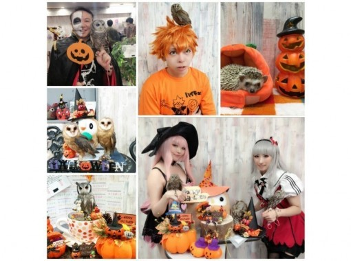 [Tokyo / Ikebukuro Animal Cafe] Experience the contact experience with Tokyo Owl Cafe & Hedgehog at the same time! (Weekdays: unlimited time) 3 minutes walk from the west exit of Ikebukuro station!の紹介画像