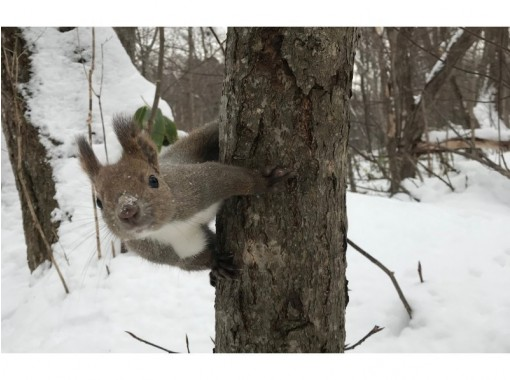 """[北海道和札幌]歡迎參加松鼠等野生動物的""""北海道森林徒步之旅""""團體!の紹介画像"""
