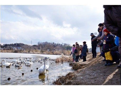 【宮城県・伊豆沼】感動!冬の渡り鳥観察