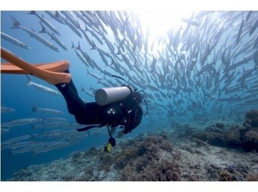 【神奈川・小田原/西湘】始めての方でも安心!体験ダイビングで海の中をのぞいてみよう