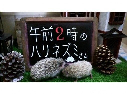 【東京・池袋】ハリネズミふれあい、チクチクモフモフ体験!平日限定たっぷり60分コースの紹介画像
