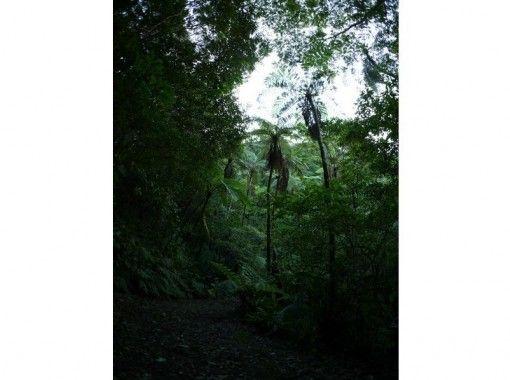 【鹿児島・奄美】奄美固有の植物や生物を満喫!金作原探検コース(2018/4新料金)