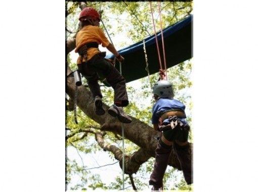 Play on trees! ☆ Lets Tree Climbing ☆の紹介画像