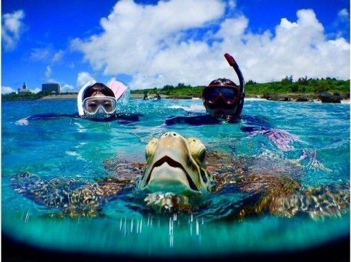 令人印象深刻的体验 邂逅率 100% 在海滩上与海龟近距离浮潜和包租美人鱼合影体验!免费照片数据の紹介画像