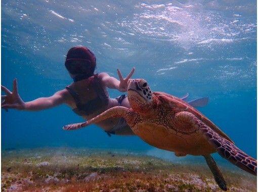 电晕措施是完美的!从12年前开始营业!海龟繁荣的点火器!与原始海龟Snorkel摄影之旅2岁的游泳率达到100%〜OK!の紹介画像
