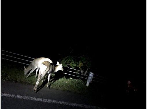 SS【北海道・知床】シリエトク・ナイトツアラー 無料送迎付き!の紹介画像