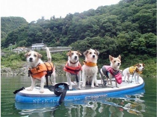 【徳島・吉野川】静水SUPクルージング体験 2時間コース( 5歳〜、愛犬と参加OK!)