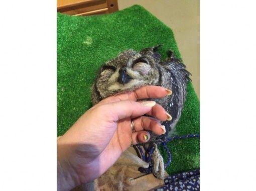 [和歌山/岩手市]在Owl Cafe體驗互動!簡易入場計劃(1小時)の紹介画像