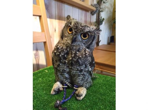 [和歌山/岩手市]在Owl Cafe體驗互動!一份飲料套餐(1小時)の紹介画像