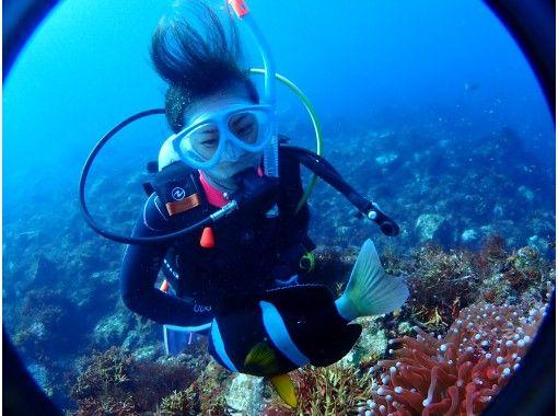 【東京・伊豆大島】水中写真付き!体験ダイビング♪