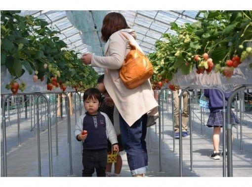 【広島・廿日市】完熟いちご狩りといちごジャムづくり体験 ‐ 広島から一番近いいちご狩り農園