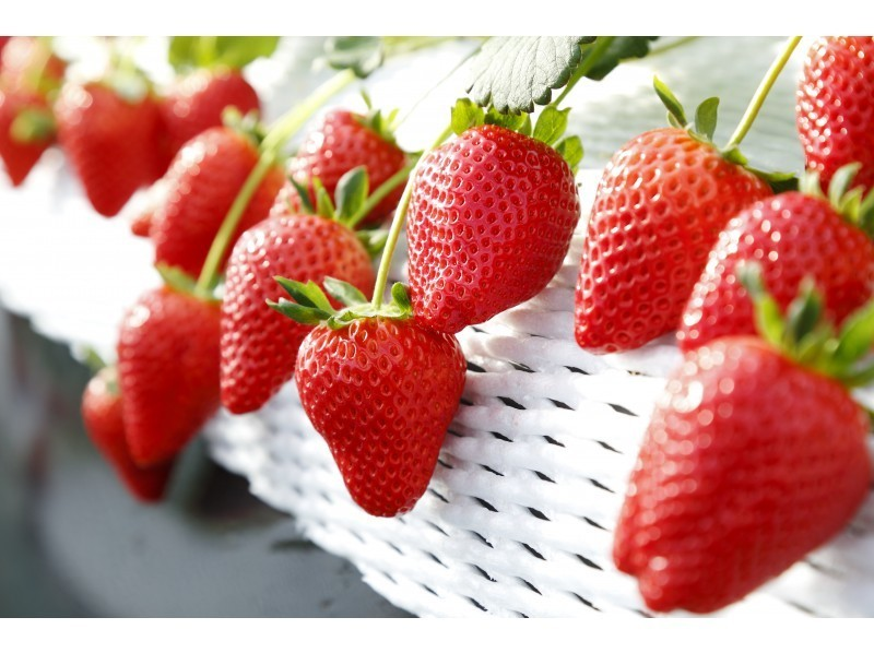 Producing area / variety of strawberries