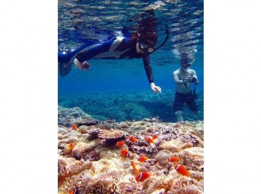 沖繩縣表島藥丸島的海山保護區! Canu  - 徒步旅行和浮潛或體驗潛水1 日遊 -の紹介画像