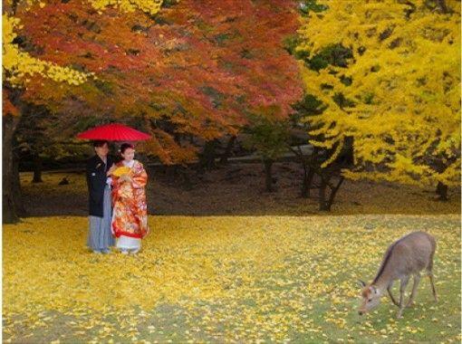 [奈良/奈良]婚禮前的地點照片!包括豐富的服裝,頭髮和化妝!の紹介画像