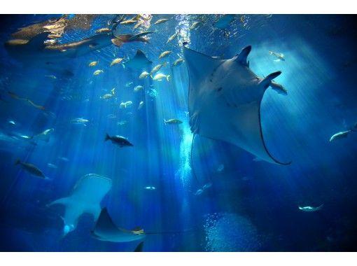 【沖縄・恩納村】美ら海水族館+琉球村入場券セットプラン