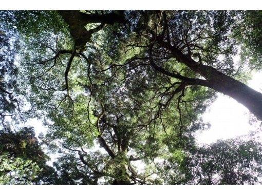【鹿児島・屋久島】世界遺産の森で朝ごはんを!パン・ご飯どちらか選べる朝食