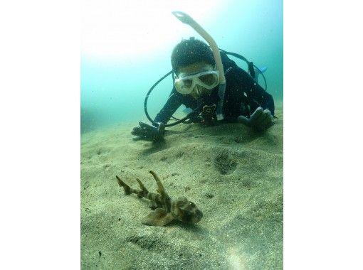 【静岡・伊豆・熱海】初心者歓迎!海中世界を覗こう ♪ 体験ダイビング(90分)「地域共通クーポン利用可能プラン」の紹介画像