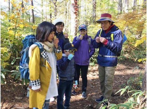 【山梨・八ヶ岳】家族で楽しむ森歩きの紹介画像