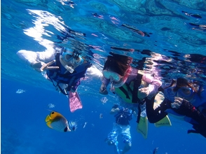 Sea World(シーワールド)の画像