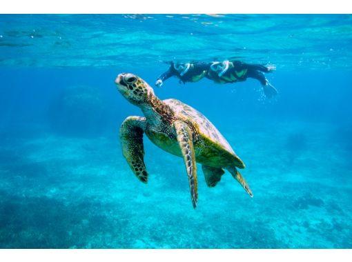 [沖縄/宮古島] 98%以上遭遇率! /浮潛之旅,與海龜一起游泳!淋浴間和吹風機♡の紹介画像