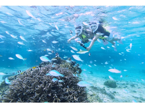 [冲绳-宫古岛]有利的设定!珊瑚浮潜+日落皮艇!淋浴间,吹风机完成风筝の紹介画像
