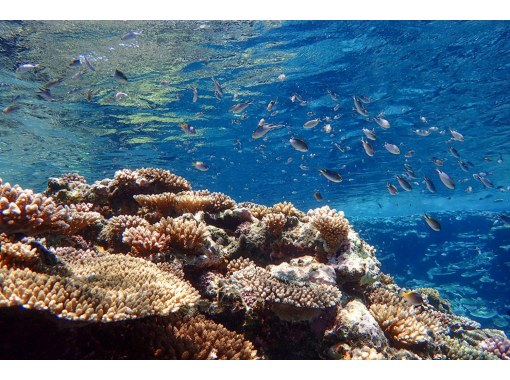 "[Ishigaki Island / Half Day] ④ Snorkeling & Cave Exploration Tour of the Unexplored Area ""Blue Cave"" [Photo Data Free]の紹介画像"
