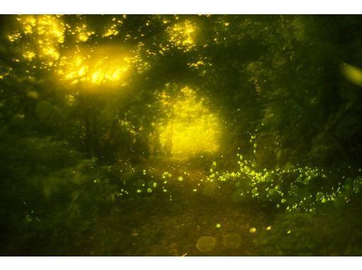 [石垣岛/日落]自然照明!限时八重山姬萤火虫观赏之旅【仅限3-5月】の紹介画像