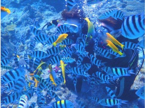 """GoTo Travel Coupon Target Store"" [Okinawa Headquarters] Half-day Churaumi Parasailing & Experience Diving (Jinbei Course) near Minna Islandの紹介画像"