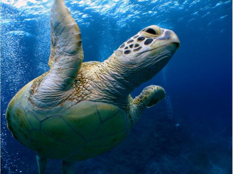 【送迎・水中写真】慶良間ボート体験ダイビング【スノーケルも】の紹介画像