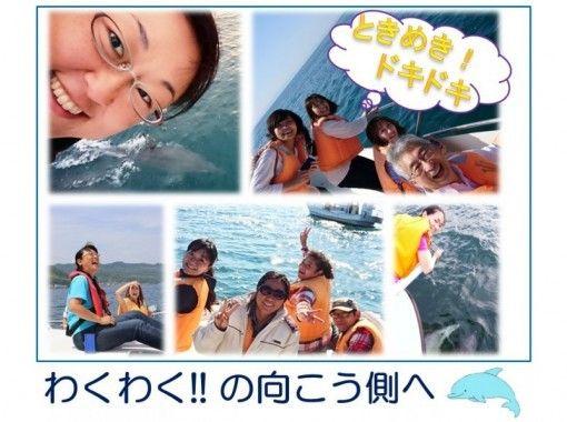 【イルカの聖地 天草】 専従ガイドがご案内! ワンランク上のイルカウォッチング