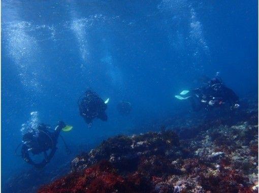 【神奈川・三浦・学生限定】たった1日でダイビングCカードゲット!夏に海遊びの幅を広げちゃう!