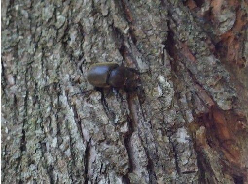 【北海道・富良野】大自然の中で昆虫採取!取った昆虫はケースに入れてお持ち帰り!1組様限定で安心の紹介画像
