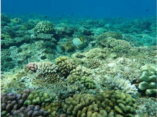 那覇港の美しいサンゴ礁と海上遊覧