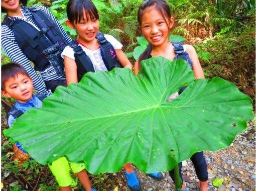 【沖縄・名護市】1グループ貸し切り!家族みんなでジャングル探検!