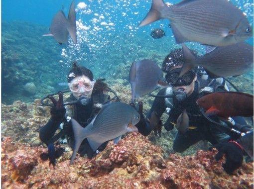 【沖縄・恩納村】体験ダイビング!ビーチからでもお魚がいっぱい